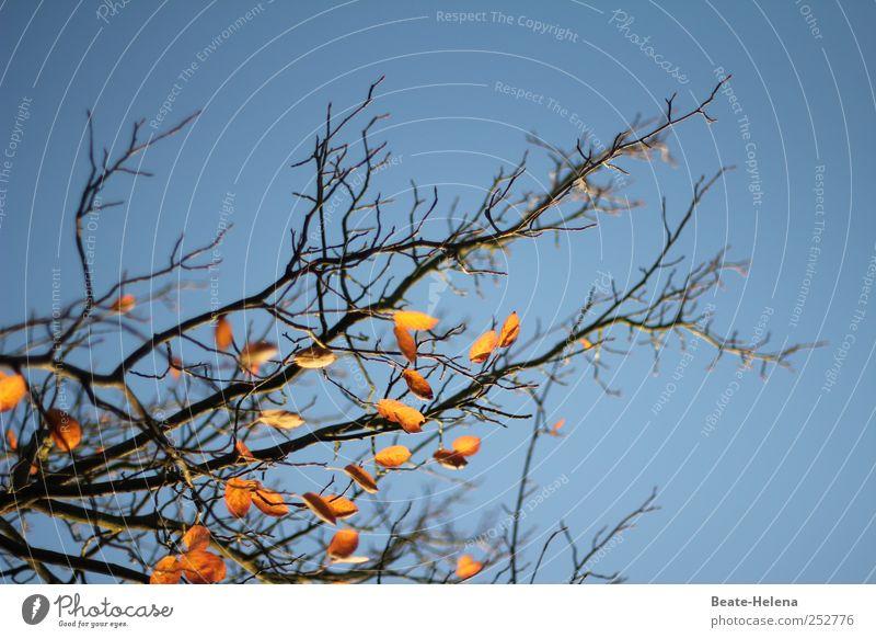 Unverhofftes Blau blau Sonne Blatt Ferne Gefühle Herbst Wege & Pfade braun Stimmung glänzend Park Wachstum Kraft wandern gold ästhetisch