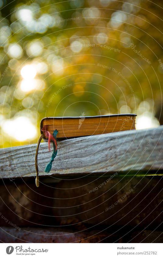 leseplatz alt ruhig Einsamkeit Herbst Tod Garten Glück Traurigkeit Denken Stimmung Park Zufriedenheit Zeit Buch lernen Papier
