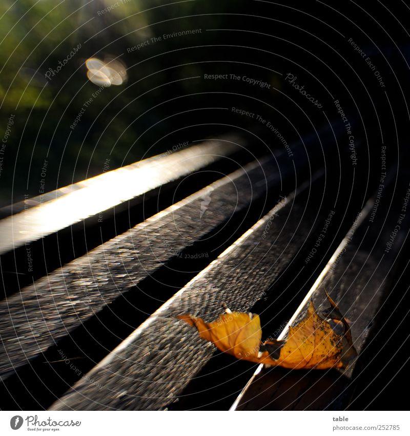 Herbstlichter Natur Baum Pflanze Sonne Blatt Einsamkeit schwarz gelb dunkel Umwelt Holz Linie braun gold liegen