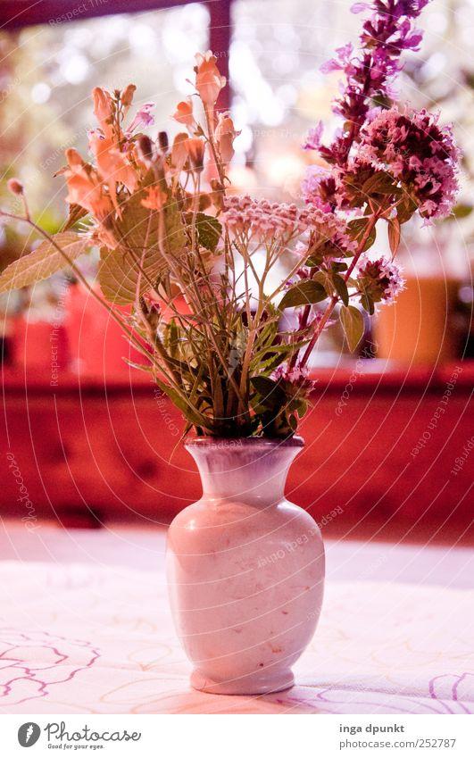 For you schön Pflanze Sommer Blume Freude Umwelt Blüte Glück Stimmung Freundschaft Geburtstag Fröhlichkeit Blumenstrauß Lebensfreude Partnerschaft Sommerurlaub