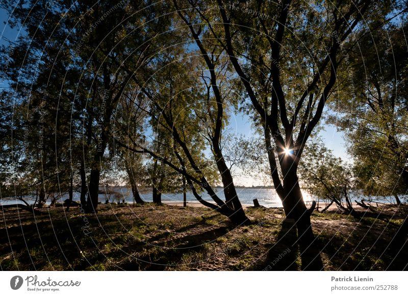 forest of illusion Natur Baum Pflanze Sonne Strand Einsamkeit Wald Herbst Freiheit Umwelt Landschaft Küste Wetter Ausflug Abenteuer Klima