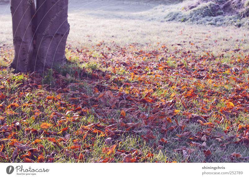 the awakening Natur Landschaft Herbst Winter Eis Frost Baum Herbstlaub Park frieren glänzend mehrfarbig ruhig Sehnsucht Einsamkeit Beginn Ewigkeit geheimnisvoll