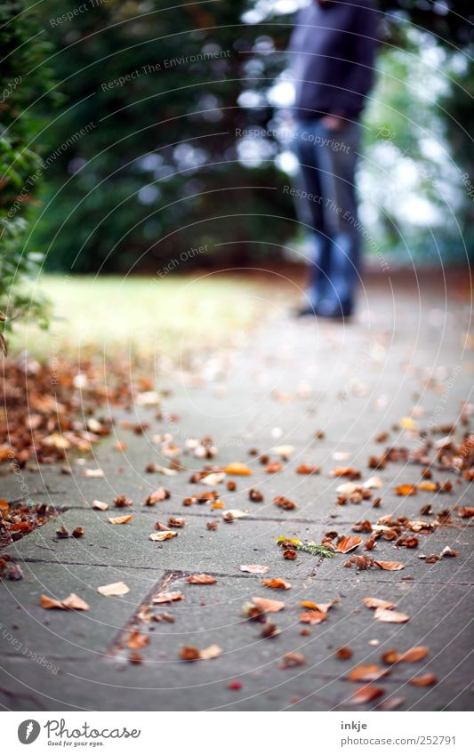 Der Mann, der immer auf die Frau mit der Kamera warten muss Mensch Natur Blatt Erwachsene Herbst Leben Gras Garten Wege & Pfade Stimmung Park Freizeit & Hobby