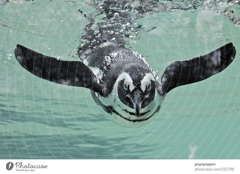 smile Wasser Ferien & Urlaub & Reisen Freude Tier Bewegung lachen Tierjunges nass Schwimmen & Baden Tourismus Fröhlichkeit Wildtier Flügel Tiergesicht Neugier