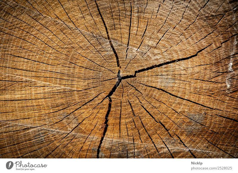 Querschnitt eines Baumstamm mit Jahresringen und Rissen (Nahaufnahme) Natur Wald ästhetisch nachhaltig natürlich schön braun gold orange rot risse Rissbildung