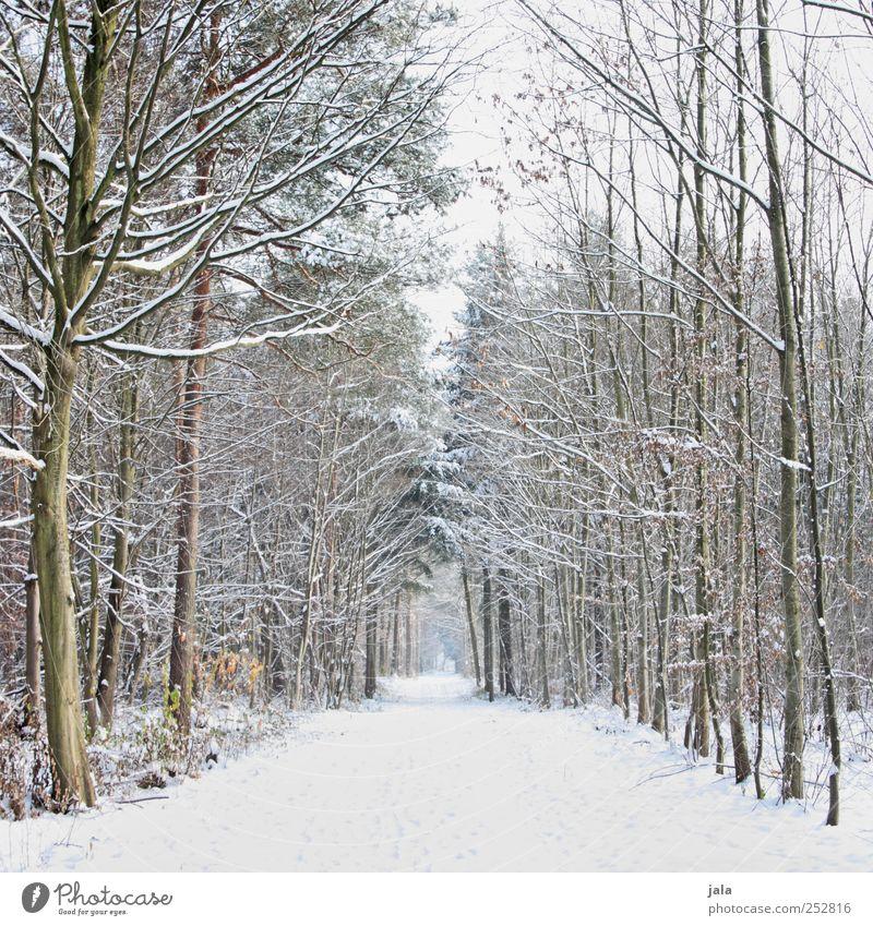 bald... Umwelt Natur Landschaft Pflanze Himmel Winter Schnee Baum Wald Wege & Pfade natürlich braun schwarz weiß Farbfoto Außenaufnahme Menschenleer Tag