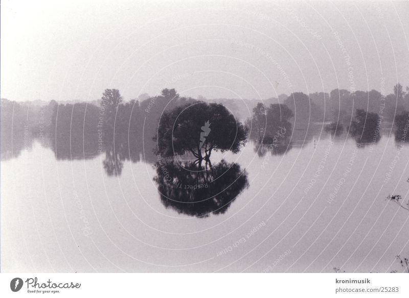 Baum im Wasser Denken Hochwasser