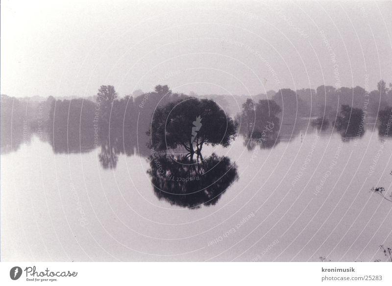 Baum im Wasser Wasser Baum Denken Hochwasser