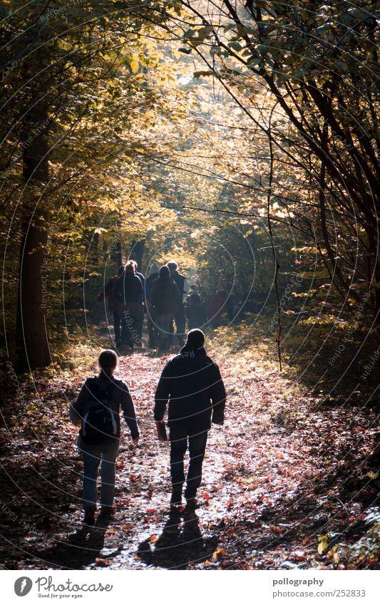 autumn leaves wandern Mensch maskulin Freundschaft Leben 2 Menschengruppe Umwelt Natur Landschaft Herbst Schönes Wetter Baum Blatt Wald genießen laufen
