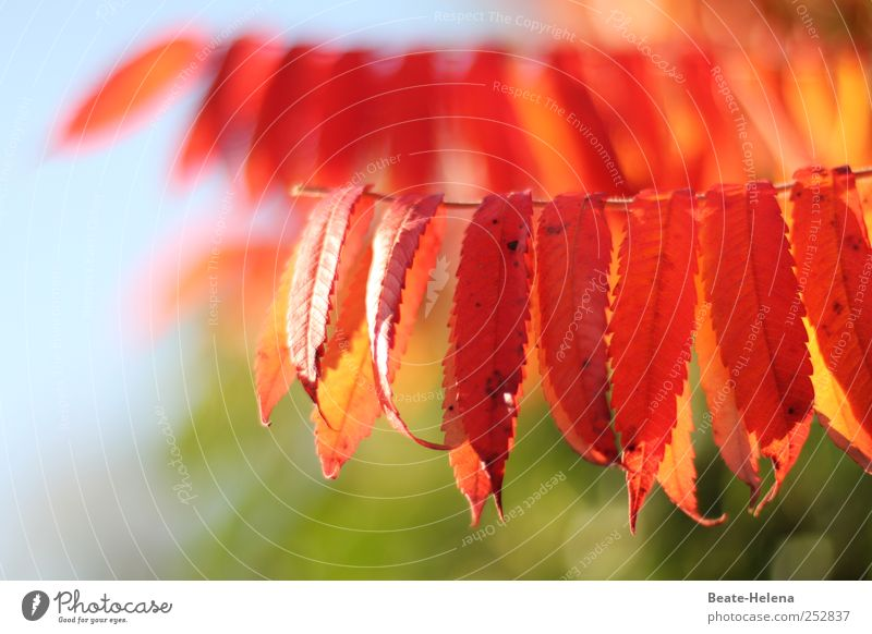 Wenn die Natur feiert Sonnenlicht Herbst Schönes Wetter Baum Blatt Park träumen blau grün rot Stimmung Sehnsucht ruhig Zufriedenheit Herbstlaub Herbstfärbung