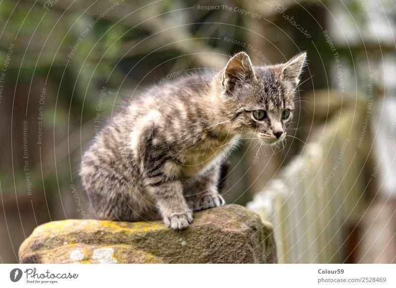 Katzenbaby Baby Natur Tier Fell Haustier 1 Tierjunges hocken Neugier grau Säugetier getiegert Hauskatze Farbfoto Außenaufnahme Tag Tierporträt