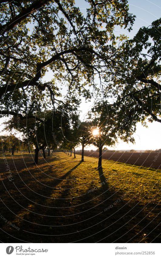 [Chamansülz2011] Streuobstwiese Landwirtschaft Forstwirtschaft Umwelt Natur Landschaft Pflanze Himmel Sommer Herbst Klima Schönes Wetter Baum Gras Nutzpflanze