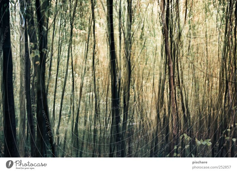 geordnetes Chaos Natur Baum Wald Kunst Design exotisch