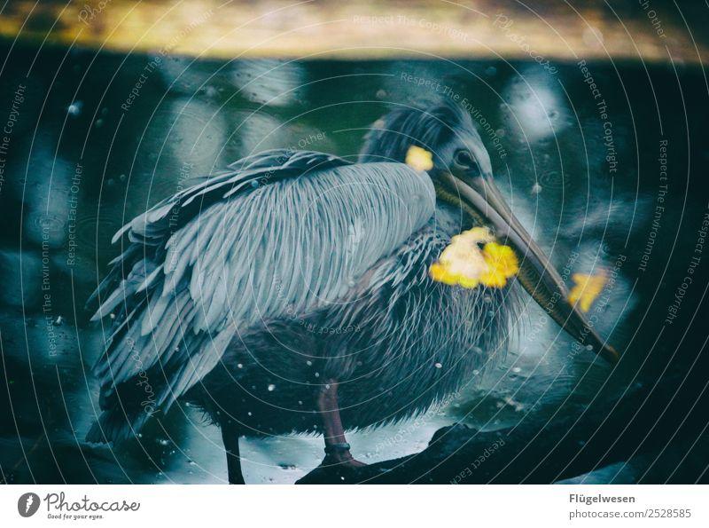 Du hast nen Vogel Natur Landschaft Tier schwarz Umwelt See Park Klima Haustier Teich Zoo Klimawandel Vogelflug Schwan Aquarium