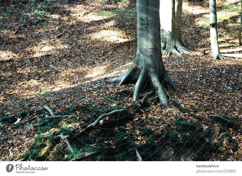 la forêt alt grün Baum Pflanze schwarz Wald Herbst Bewegung Wege & Pfade Traurigkeit braun Erde gehen laufen groß natürlich
