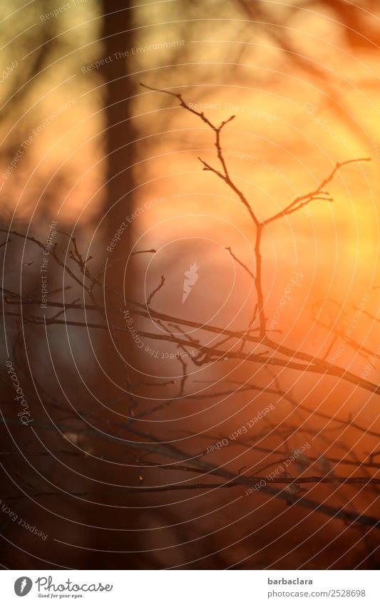 Verwandlung | Natur im November Sonne Herbst Winter Klima Pflanze Baum Sträucher Blatt Zweige u. Äste leuchten hell gold rot Stimmung Hoffnung ruhig