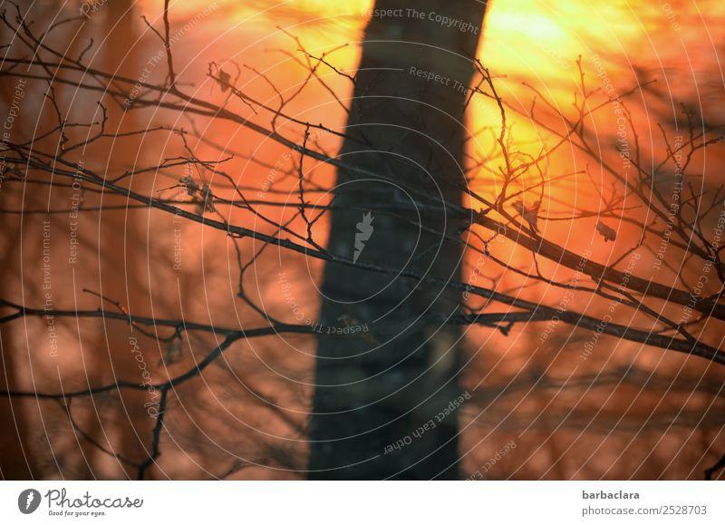 herausragend | Baum im Abendlicht Landschaft Pflanze Urelemente Sonne Herbst Winter Schönes Wetter Sträucher Wald genießen leuchten hell Wärme gold Gefühle