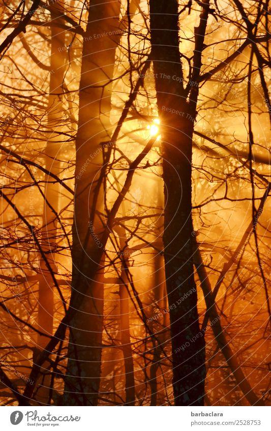goldenes Abendlicht im Herbst Landschaft Pflanze Urelemente Sonne Schönes Wetter Baum Sträucher Zweige u. Äste Wald leuchten Wärme Gefühle Stimmung