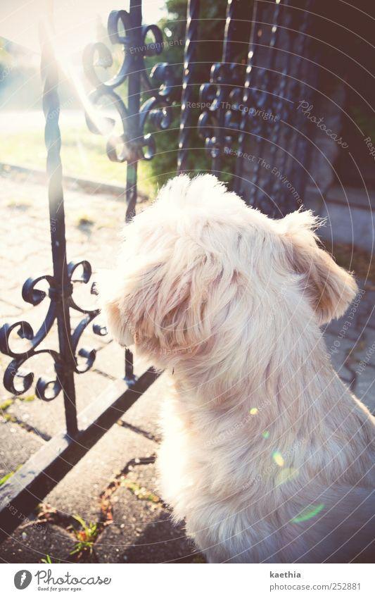 wachendes auge Baum Sommer ruhig Tier Haus Erholung Straße Wand Spielen Umwelt Garten Mauer Hund sitzen gold Beton