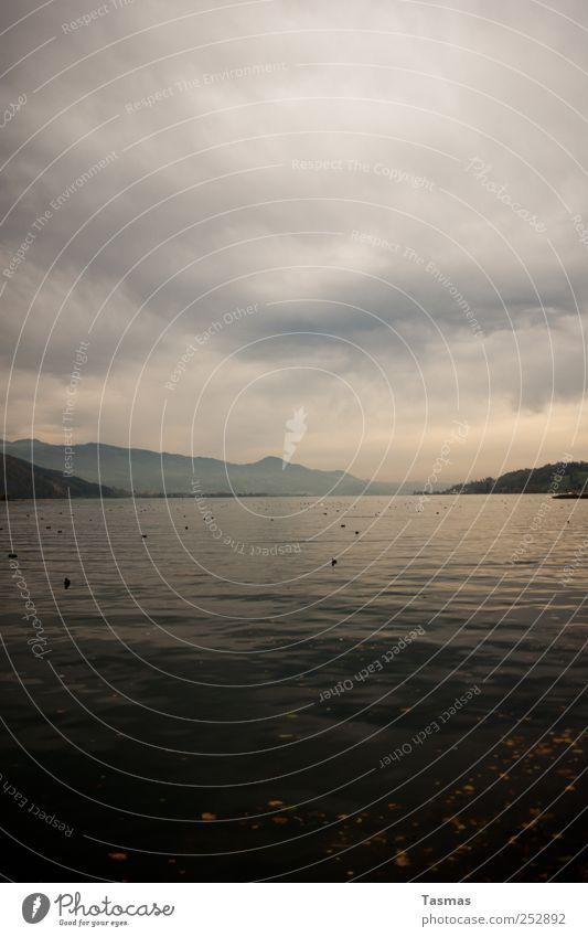Herbst Natur Wasser Wolken Umwelt Landschaft See Wetter Abenteuer ästhetisch authentisch Urelemente Aussicht schlechtes Wetter Zürich See