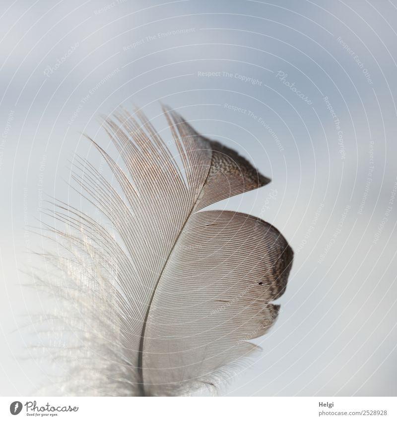 Nahaufnahme einer filigranen Feder vor blau-grauem Himmel Natur einzigartig klein natürlich braun ästhetisch Leichtigkeit zart leicht Farbfoto Gedeckte Farben