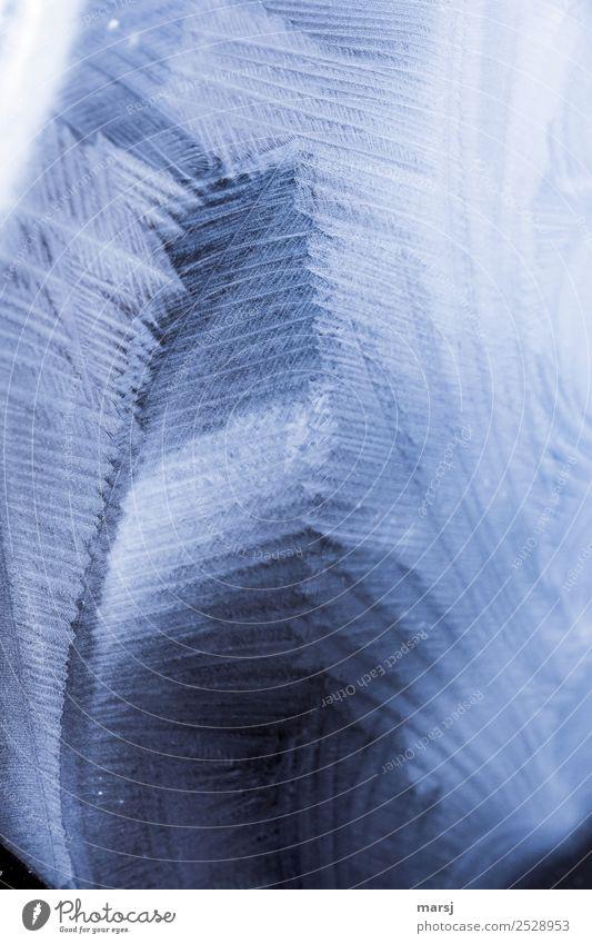 Faszination Eis Leben harmonisch Sinnesorgane Winter Frost Eiskristall außergewöhnlich dunkel dünn authentisch fantastisch gigantisch einzigartig kalt natürlich