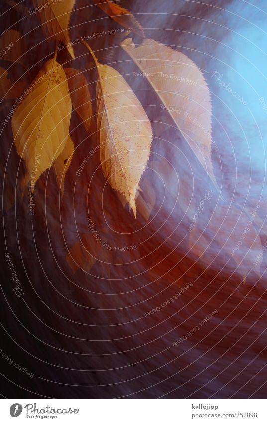 herbststurm Umwelt Natur Landschaft Pflanze Tier Luft Herbst Baum Blatt Garten Park fallen Bewegung Indian Summer Langzeitbelichtung Farbfoto mehrfarbig