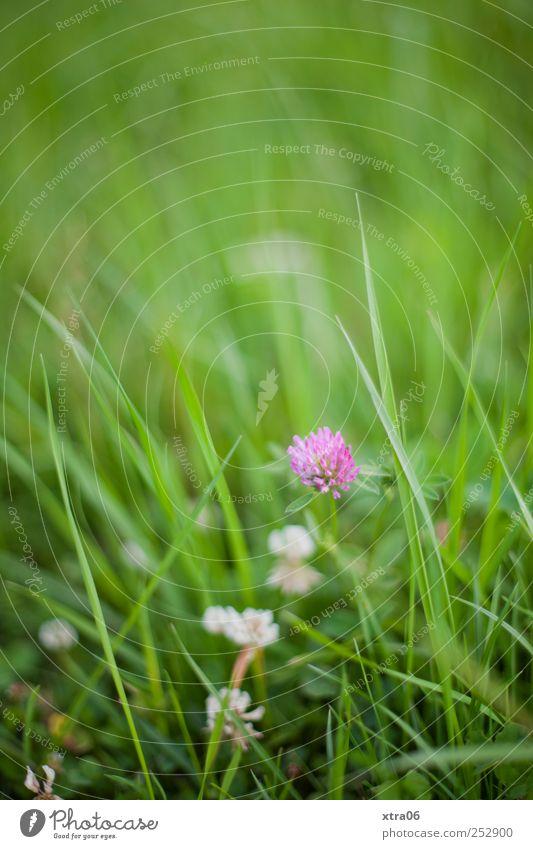 alles Gute kleine Leoni Umwelt Natur Pflanze Blume Gras grün Farbfoto Außenaufnahme