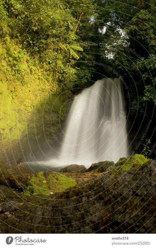 Natur Wasser grün Ferien & Urlaub & Reisen Freude Sommer ruhig Wald Erholung Landschaft Zufriedenheit Kraft nass wandern Abenteuer Tourismus