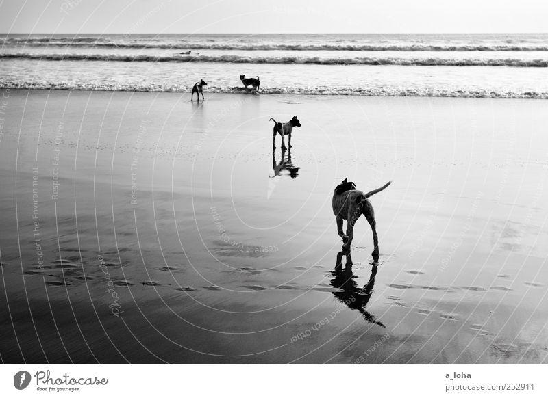 Stray Urelemente Sand Wasser Schönes Wetter Wellen Küste Strand Meer Tier Haustier Hund Fährte Tiergruppe Rudel Fernweh Natur Ferien & Urlaub & Reisen Ferne