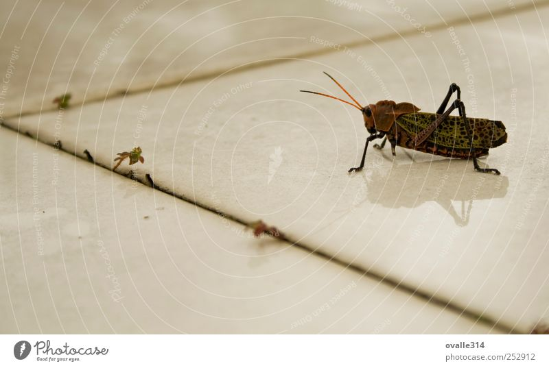 Grillo Tier Unwetter Wildtier Heimchen 1 Insekt Fliesen u. Kacheln beobachten Bewegung warten dunkel gruselig nah grün rot weiß Entschlossenheit Farbfoto