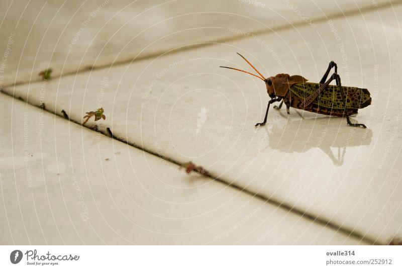 weiß grün rot Tier dunkel Bewegung warten Wildtier beobachten Insekt nah gruselig Fliesen u. Kacheln Unwetter Entschlossenheit Heimchen