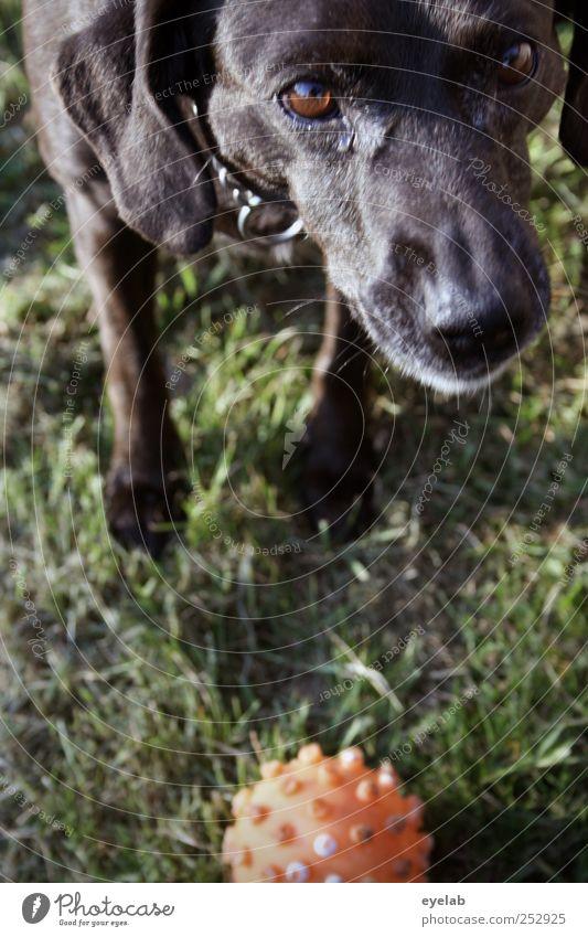 Hol das Stöckchen ! Natur grün rot Freude schwarz Tier Auge Wiese Hund Spielen Gras Bewegung Garten Park Freundschaft orange