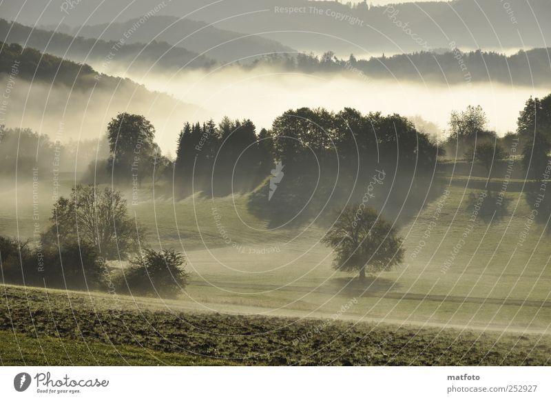 Frühnebel Landschaft Sonnenlicht Herbst Schönes Wetter Nebel Baum Wald Menschenleer Erholung Gefühle Natur Farbfoto Außenaufnahme Morgen Schatten Sonnenstrahlen