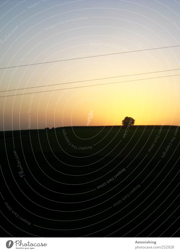 am Horizont Umwelt Natur Landschaft Pflanze Luft Himmel Wolkenloser Himmel Sonne Sommer Wetter Schönes Wetter Baum Wiese Feld Hügel dunkel Leitung