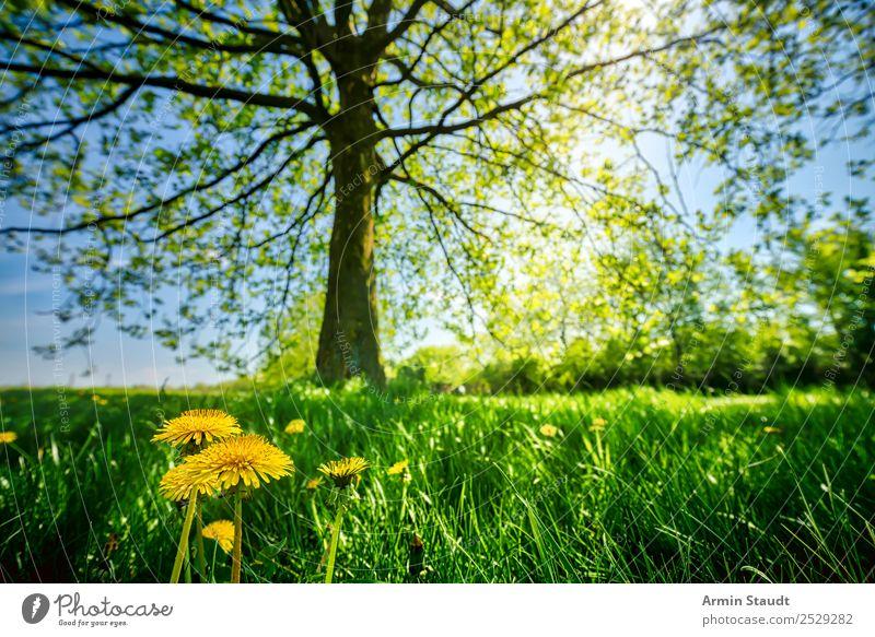 Blümchen mit großem Bruder Freude Sommer Umwelt Natur Landschaft Tier Erde Wolkenloser Himmel Frühling Schönes Wetter Pflanze Baum Blume Löwenzahn Gras Park