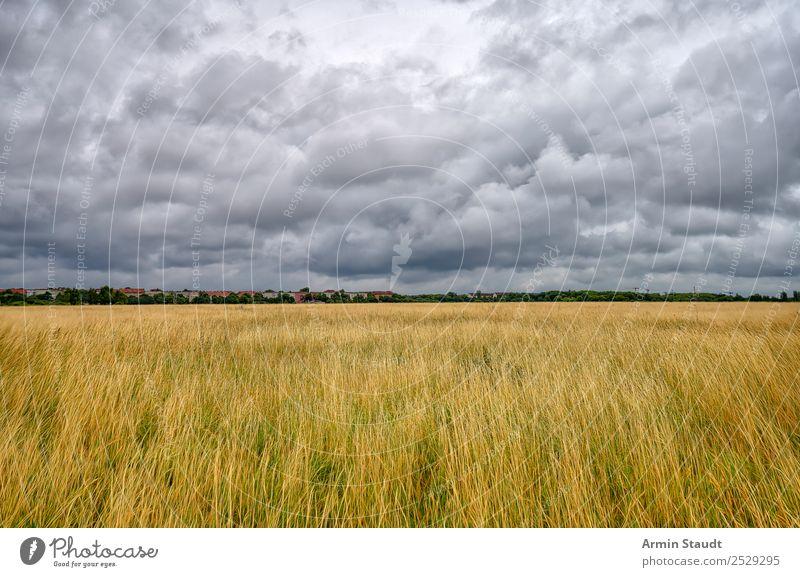 Berliner Wetter Ausflug Ferne Umwelt Natur Landschaft Urelemente Luft Himmel Wolken Gewitterwolken Klima schlechtes Wetter Unwetter Regen Wiese Hauptstadt Haus
