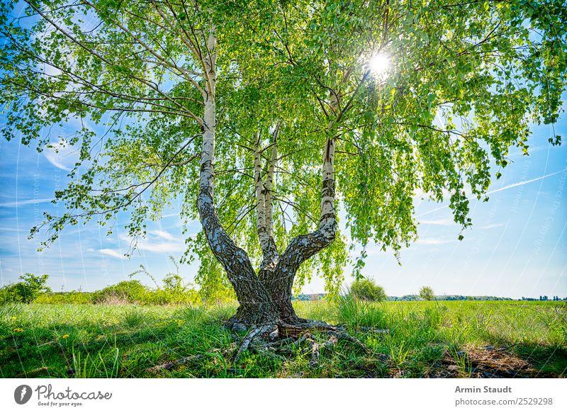 Birke mit Sonne Himmel Natur Sommer Pflanze schön Landschaft Baum Ferne Leben Umwelt Frühling Beleuchtung Wiese Stimmung Ausflug Zufriedenheit