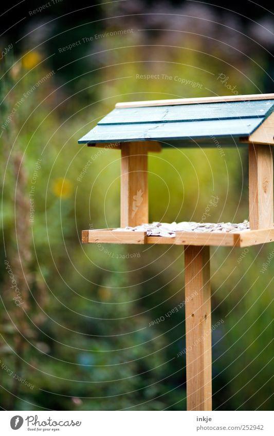 """""""FLY-IN"""" grün Freude Herbst Garten Stimmung Freizeit & Hobby natürlich hoch Häusliches Leben stehen Hilfsbereitschaft Sträucher einfach Appetit & Hunger eckig"""