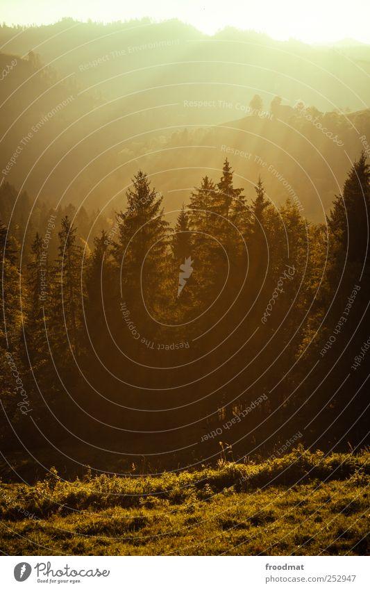gold Natur Sommer ruhig Wald Herbst Umwelt Berge u. Gebirge Landschaft Nebel Hügel Alpen Kitsch Idylle Schweiz Schönes Wetter