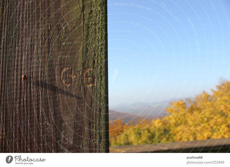 Kleiner Käfer ganz groß... Himmel Natur Baum Pflanze Tier Wald Herbst Umwelt Landschaft Gefühle Graffiti Holz Glück Zusammensein Schriftzeichen Turm