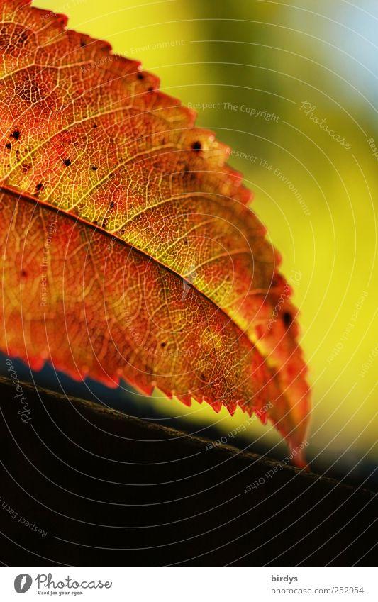 Herbstblatt Natur grün schön rot Blatt Farbe Leben frisch ästhetisch natürlich Wandel & Veränderung leuchten Spitze Warmherzigkeit Schönes Wetter