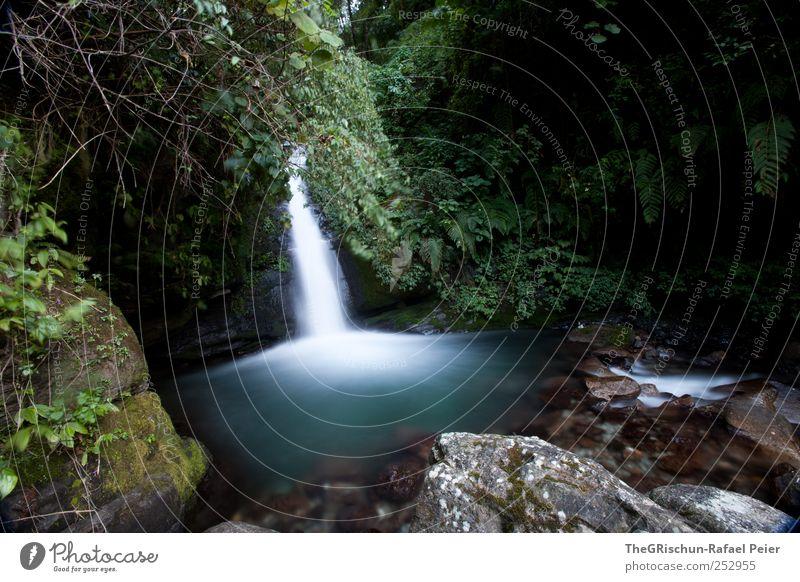 wasserfall Umwelt Natur Pflanze Wasser Wassertropfen Bach Wasserfall kalt nass natürlich braun grün weiß Stein Sträucher Unterholz Urwald fließen Farbfoto