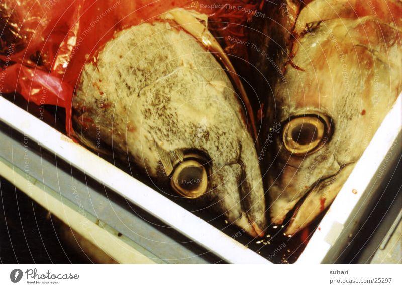 Fischköpfe Fischkopf Fischmaul obskur