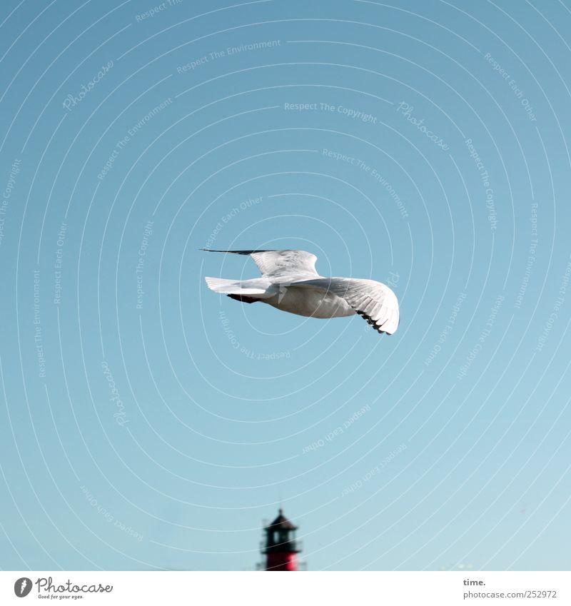 Moorhuhn (inkognito) Himmel weiß rot Tier Freiheit Küste Vogel fliegen Flügel Möwe Leuchtturm