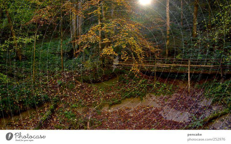 brückentag Natur Herbst Landschaft wandern Brücke Romantik Alpen Urwald Schönes Wetter Schlucht Herbstwald