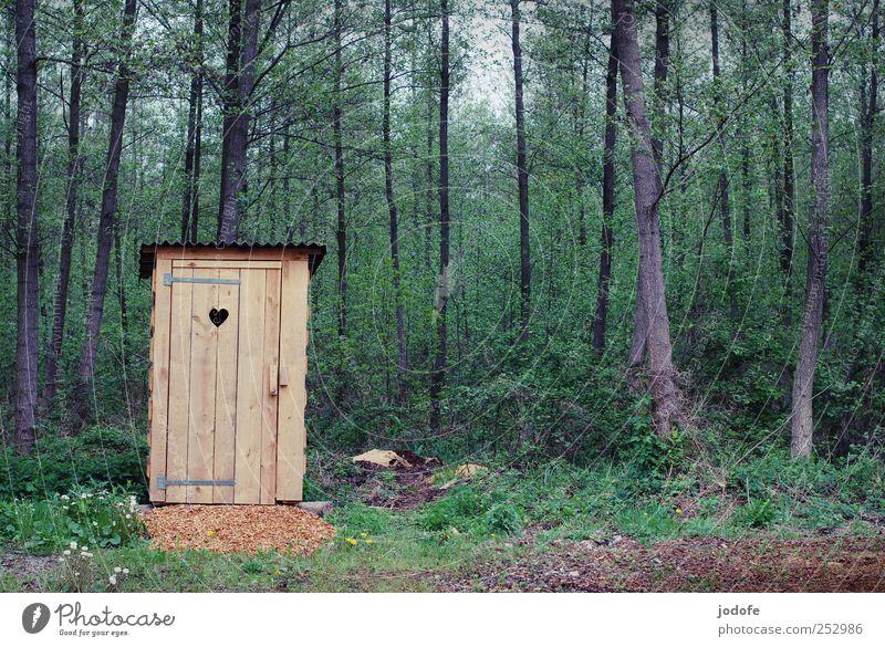 stilles Örtchen Umwelt Natur Pflanze Wald einfach Toilette toilettenhäuschen Plumpsklo Hütte Herz Holz Einsamkeit Wildnis freie landschaft grün braun