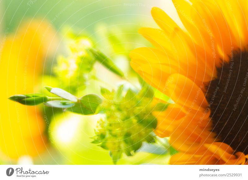 Teil eines Blumenstraußes mit Sonnenblume Sommer Blatt Blüte Blühend Duft leuchten träumen ästhetisch Fröhlichkeit frisch hell natürlich gelb gold grün