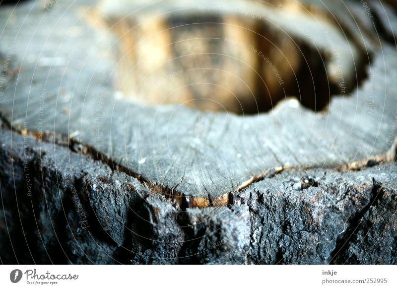 ....bald Brennholz Landwirtschaft Forstwirtschaft Baum Baumrinde Baumstruktur Baumstumpf Lebenslinie alt außergewöhnlich dunkel kalt nah trist braun Stimmung