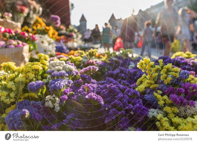 Blumen und Menschen auf dem Markt kaufen Sommer Sommerurlaub Sonne Menschenmenge Pflanze Blüte Grünpflanze Tallinn Estland Stadt Hauptstadt Stadtzentrum